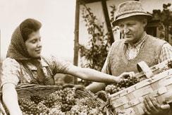 Familie Weinhaus Nüßlein